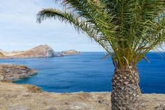 Bare coast of Madeira Island with single palm tree Royalty Free Stock Photo