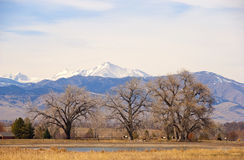Bare Cottonwood Trees on the Colorado Prairie Royalty Free Stock Image