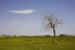 bare den ensamma treen Arkivbild