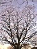 bare den förgrena sig treen Arkivbild