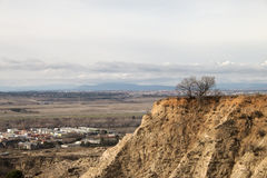 Bare dry trees on top of soil hill landscape Stock Photos