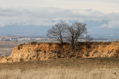 Bare dry trees on top of soil hill landscape Royalty Free Stock Photography