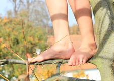 Bare feet on branch. Bare feet of a little kid - girl standing on thin branch Stock Photography