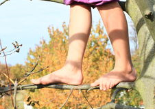 Bare feet on branch. Bare feet of a little kid - girl standing on thin branch stock image