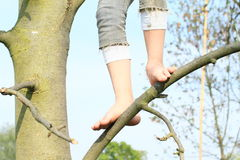 Bare feet on branch. Bare feet of a little kid - girl standing on thin branch Royalty Free Stock Images