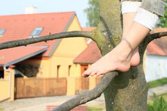 Bare feet on branch Stock Images