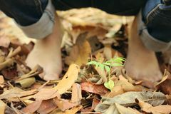 Bare feet on dry leaves Stock Photos