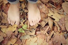 Bare feet on dry leaves Stock Photo