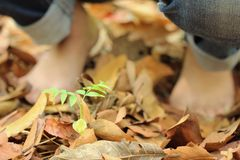 Bare feet on dry leaves Royalty Free Stock Images