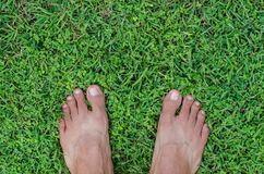 Feet On Field of Lawn. Bare feet on a field of lawn for natural background Royalty Free Stock Photography