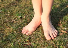 Bare feet on grass. Bare feet of a little kid - girl standing on grass of meadow Stock Image