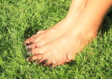 Bare feet on grass. Bare feet of a young woman - girl standing on grass of meadow royalty free stock photos