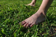 Bare feet in the green grass Royalty Free Stock Image
