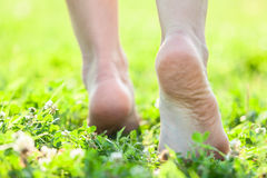 Bare feet on the soft summer grass Stock Photos