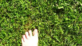 Bare feet step on grass with dew stock footage