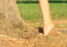 Bare feet on tiptoes Royalty Free Stock Photo