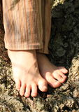 Bare feet on tree. Bare feet of a little kid - girl standing on an old tree Stock Images