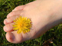 bare foot with flower Royalty Free Stock Photos