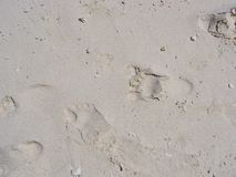 Bare footprints in the sand Stock Images