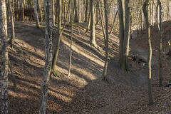 Bare forest Stock Photos