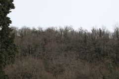 Bare forest in winter royalty free stock image