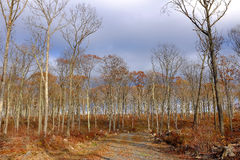 Bare Forest on Wintry Day. A gravel road leads into a bare forest on a wintry day in the Pocono Mountains of Pennsylvania Royalty Free Stock Photography