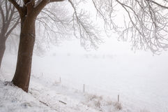 Bare and frosty overhanging branches in a wintry landscape Royalty Free Stock Images