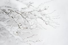 Bare Frozen Branches Covered with Fresh Snow. Winter Landscape Stock Photos