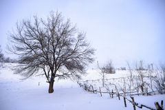 Bare Frozen Tree in Snowy Winter Field under Blue Sky Stock Photos