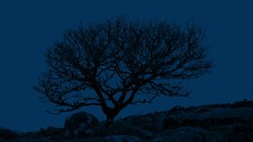 Gnarled Tree In Rocky Landscape At Night. A bare gnarled tree in barren area late at night stock video footage