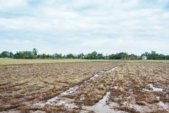 Bare land for agriculture in the process of erosion in thailand. Soil on farm converted to agricultural production Royalty Free Stock Photography