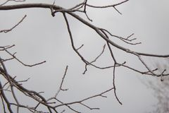 Bare, Leafless Tree Branches Against A Grey Sky. Bare, leafless tree branches against a grey winter sky. Tree in hibernation on a cold winter day stock images