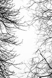 Bare leafless tree branches with white sky Stock Image