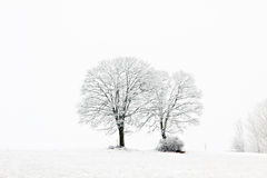Bare leaved trees in winter Royalty Free Stock Photos