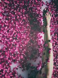 Bare leg of Asian woman exposed above luxury rose petal bath. The bare skin of an Asian lady`s leg, seen in a sensuous posture in a luxury bath full of floating stock photography