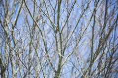 Bare Limbs During Winter. Close up of bare limbs during the winter season stock photography