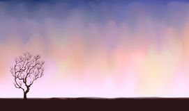 Bare lone tree Stock Image