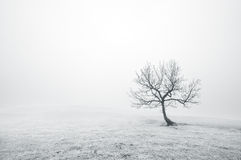 Bare lonely tree in black and white stock photography