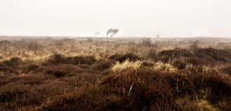 Bare lonely tree in the morning autumn mist. Texel Island, Netherlands