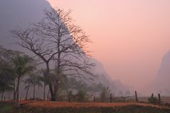 Bare majestic tree at dawn Stock Image