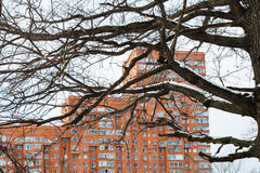 Bare oak tree branches and urban apartment house Royalty Free Stock Photo