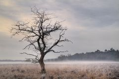 Tree on moor with groundfog and hoarfrost Royalty Free Stock Photography