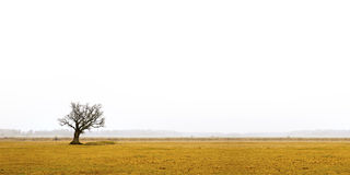 Bare oak tree in gloomy landscape Stock Photography