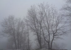 Bare Oak Trees - Quercus in Thick Fog Royalty Free Stock Photography