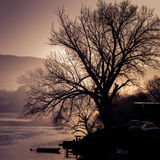 Bare old tree by the river at sunset Royalty Free Stock Image