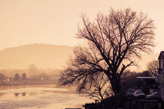Bare old tree by the river at sunset Royalty Free Stock Photo