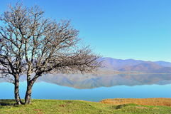 Bare pear tree and a lakescape. Small Prespa lake in Greece and a wild pear tree with bare branches on a hill Royalty Free Stock Photography