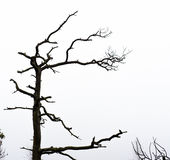 Bare pine tree branches Stock Image