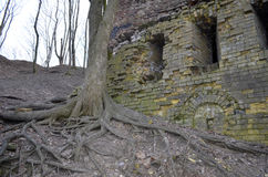 Bare roots of on old tree near a wall of a ruined castle Stock Photos