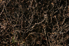 Bare Shrub Branches Pattern Stock Images